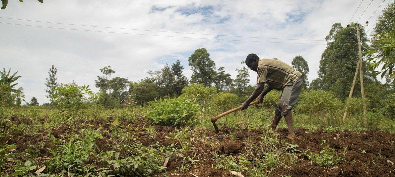 Mudança climática afeta também produção agrícola