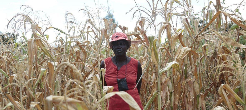 برنامج الأغذية العالمي يقول إن أكثر من ثلث سكان الأرياف في زمبابوي سيعانون من انعدام الأمن الغذائي مع حلول تشرين أول/أكتوبر 2019.