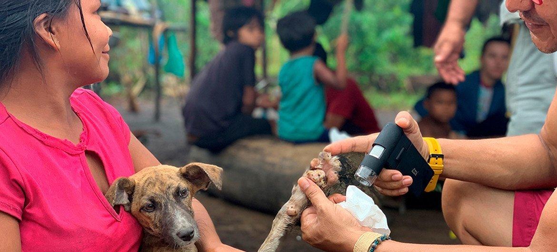En hasta el 99% de los casos humanos, el virus de la rabia es transmitido por perros domésticos.