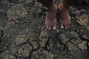 Ceará, no Brasil, tem 93% do território no semiárido, com temperaturas muito altas, chuvas escassas e concentradas e problemas sérios de falta de água.