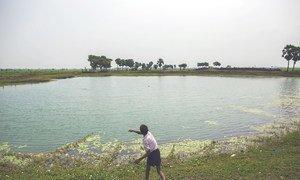 Un estanque en la aldea de Dhokandpur, India, usado para recolectar agua de lluvia que se utiliza exclusivamente para consumo humano. El agua se trata en una pequeña planta de filtración y posteriormente se suministra a la aldea.