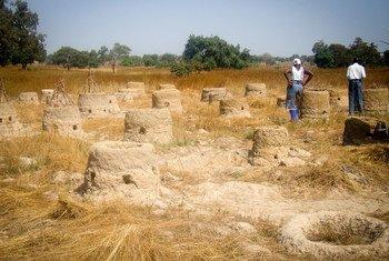 Desertification is threatening Ghana's subsistence farmers. (file)