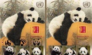 """联合国邮政管理局今天发行两版以联合国开发计划署(UNDP)全球动物形象大使——双胞胎熊猫""""启启""""和""""点点""""为主题的邮票。"""