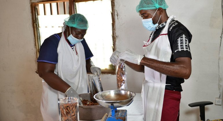 Food Heroes: Cameroon's shrimp entrepreneur