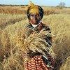 Mkulima nchini Gambia akionesha mpunga aliopanda lakini umeshindwa kuota kutokana na uhaba wa maji