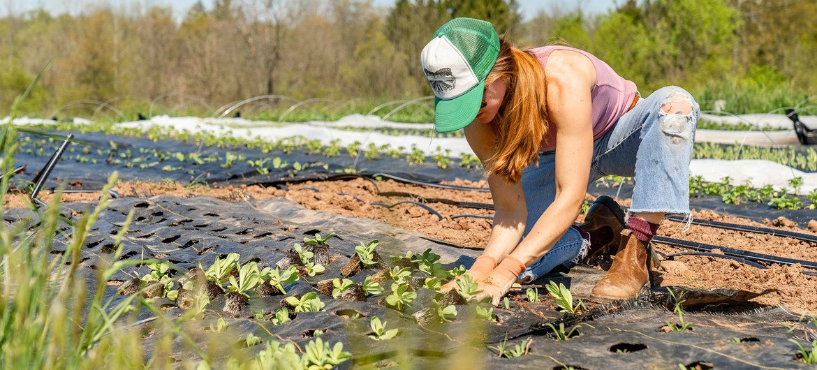 A woman tends to plants on a small-scale, sustainable farm in Pennsylvania, USA.