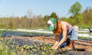 امرأة تعتني بنبتاتها في مزرعة صغيرة مستدامة في ولاية بنسلفانيا بالولايات المتحدة الأمريكية.