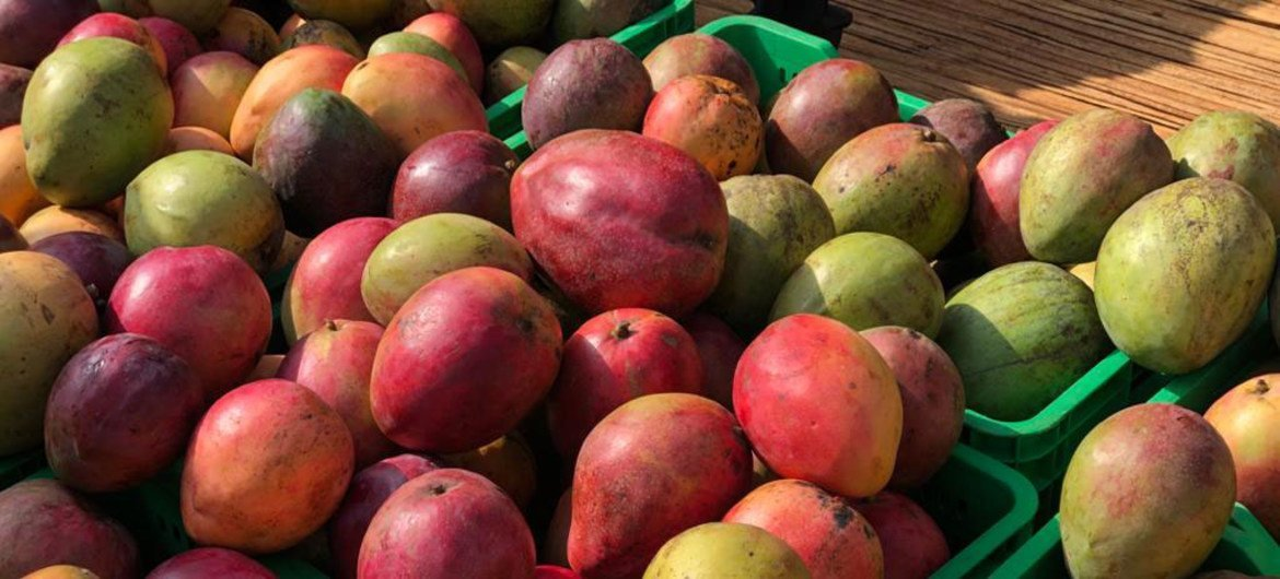 Fresh fruit, such as mangoes, are sourced from local farmers in Uganda.