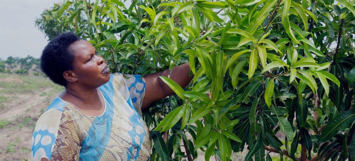 Ugandan entrepreneur Julian Omalla has built a fresh juice business with more than five million customers.
