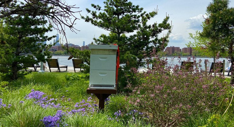 Une ruche à Domino Park à Brooklyn, New York City.