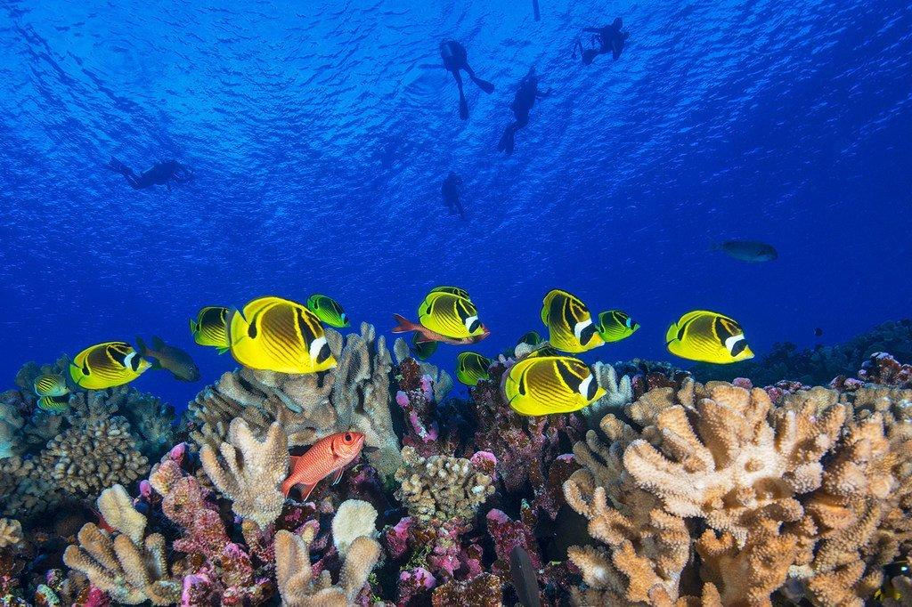 在位于太平洋的法属波利尼西亚海域,珊瑚礁鱼在自由地穿梭。