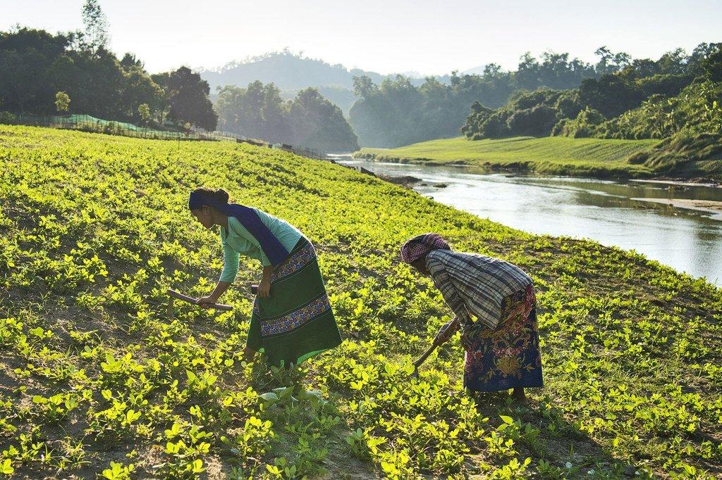 Les prix élevés des denrées alimentaires font que des millions de familles dans le monde n'ont pas accès à une nourriture nutritive.