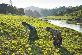 高粮价使世界各地数以百万计的家庭无法负担有营养的食物。