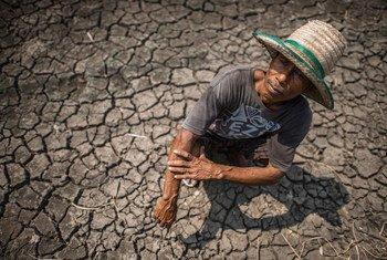 Las condiciones meteorológicas extremas, como la sequía generalizada, están provocando pérdidas económicas entre los agricultores de todo el mundo.
