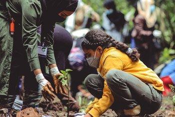 इथियोपिया ने वर्ष 2020 में राष्ट्रीय स्तर पर पेड़ लगाने का एक बड़ा अभियान शुरू किया जिसके तहत 4 अरब पेड़ लगाने का महत्वाकाँक्षी लक्ष्य रखा गया है.