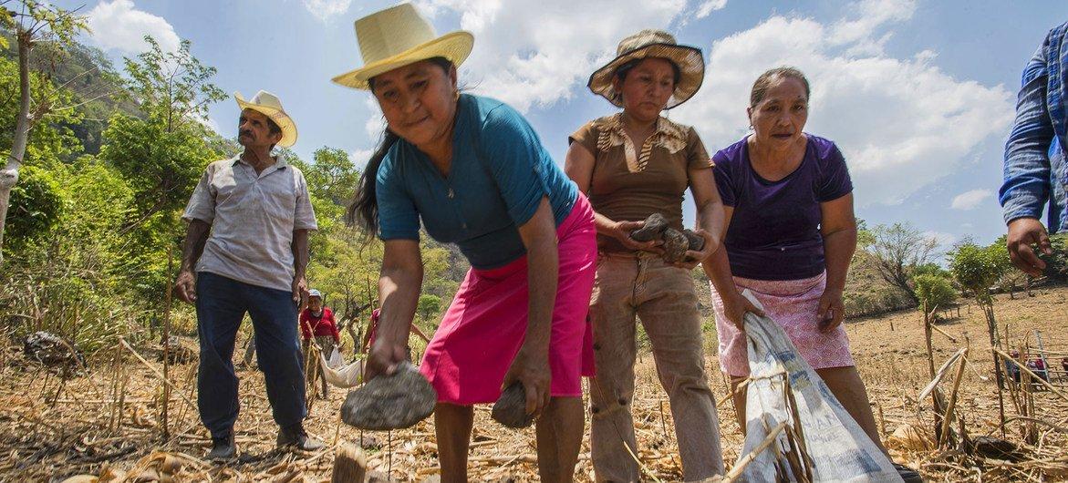 Mujeres que trabajan en un programa de conservación del suelo del Programa Mundial de Alimentos en El Salvador