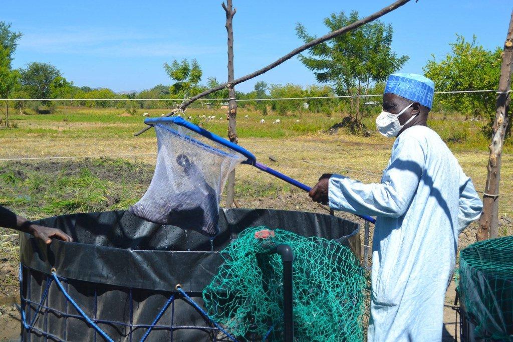 La FAO offre une formation en aquaculture à des personnes déplacées au Cameroun.