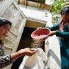 Women farmers harvest grains in Gisar, Tajikstan.