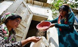 В мире производится достаточно продовольствия для того, чтобы накормить все население, однако многие голодают или недоедают. На фото: фермеры в Таджикистане.