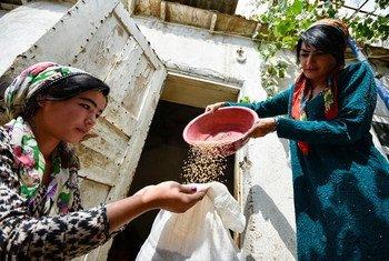 Agricultoras em Agências Gisar, no Tajiquistão