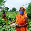 نساء يزرعن الخضروات في مزرعة في الهند كجزء من برنامج اليونيسف لدعم الريف.