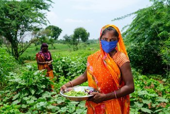 Women grow vegetables on a farm in India as part of a UNICEF-supported rural development programme.