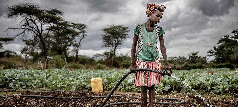 An agro-pastoralist woman waters a crop in Amudat, Uganda.