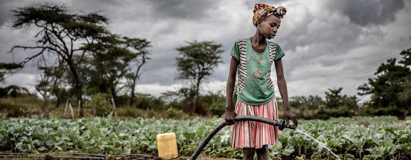 एक ग्रामीण महिला, युगाण्डा के अमुदत में फ़सलों को पानी दे रही है.