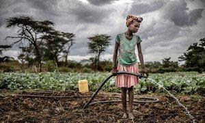 Une femme arrose le sol qu'elle cultive à Amudat, en Ouganda.
