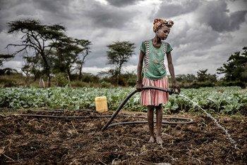 Msichana anayejishughulisha na kilimo na ufugaji akimwagilia mazao nchini Uganda