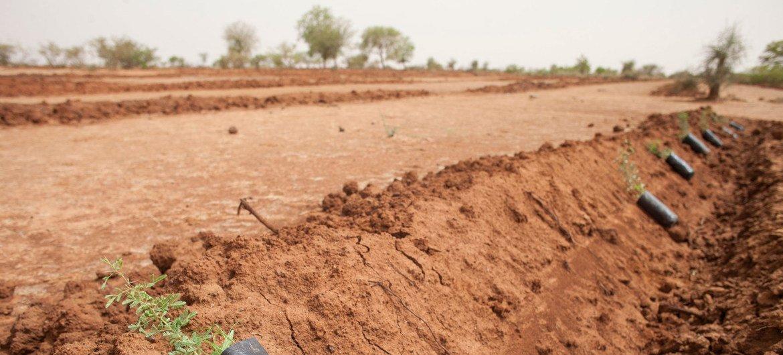 Reflorestação faz parte de programas de ação contra a desertificação