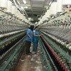 Segundo a OIT, mais de 50% das pessoas não recebem segurança social de trabalhoo