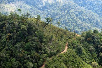 Costa Rica's tropical rainforests can be found in the southwest of the country as well as in the Atlantic lowlands.