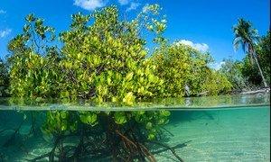 Les écosystèmes côtiers et marins fournissent de la nourriture, des moyens de subsistance et une protection côtière à plus d'un milliard de personnes dans le monde.