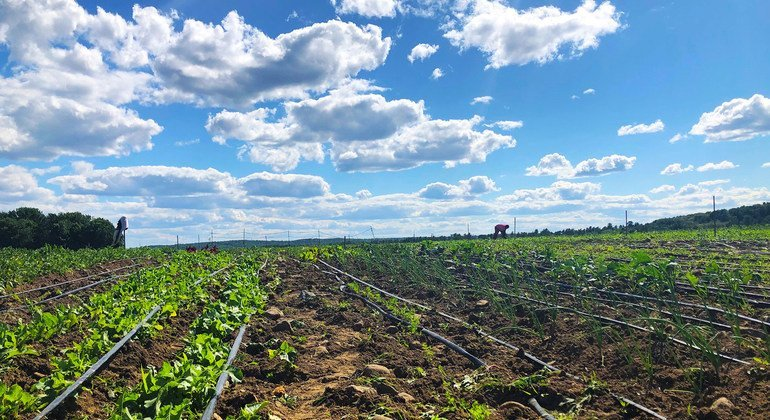Some 220 former refugee families from Somalia are now farming in the US state of Maine.