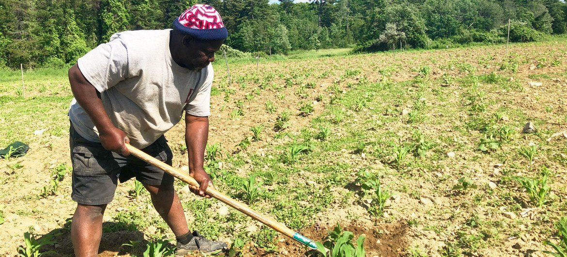 Farmers tin  turn  their ain  crops connected  1  tenth of a hectare of onshore