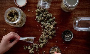 The potency of cannabis has increased by as much as four times in parts of the world over the last 24 years.