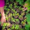 """El Fondo Internacional de Desarrollo Agrícola nos advierte que la falta de diversidad biológica """"nos impedirá luchar contra el cambio climático o el hambre""""."""