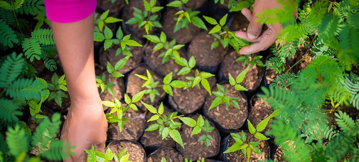 Women in rural Costa Rica are planting trees to help fight climate change.