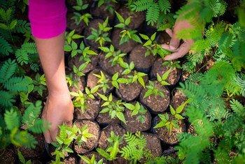 कोस्टा रीका के ग्रामीण इलाक़े में एक महिला जलवायु परिवर्तन से लड़ाई में मदद के लिये पादप रोपण कर रही है.