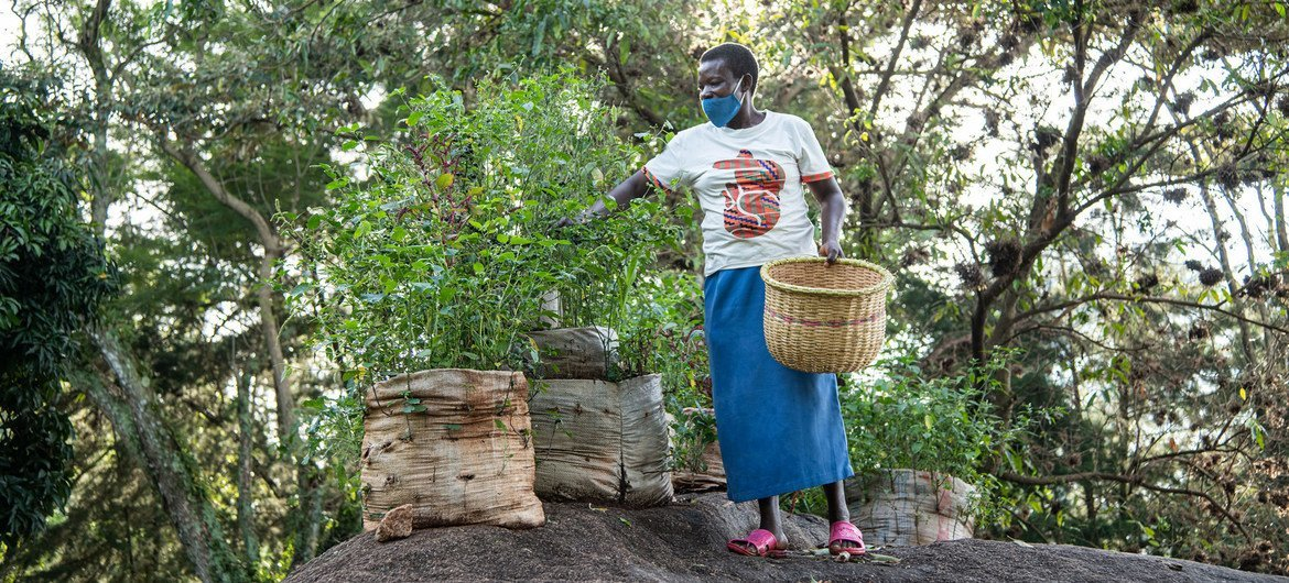 A Kenyan farmer has been experimenting with a range of new seeds which is helping to increase biodiversity where she lives.