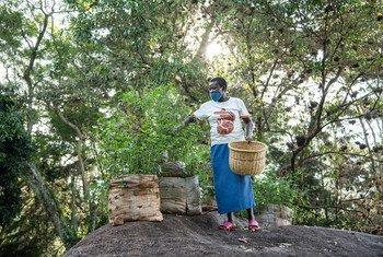 Une agricultrice du Kenya expérimente de nouvelles semences qui aident à améliorer la biodiversité.