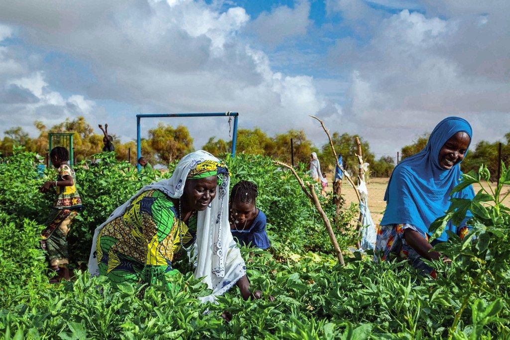 मॉरीतानिया के दक्षिणी हिस्से में, महिलाओं की सहकारिता वाली खेतीबाड़ी में सिंचाई करने के लिये, सौर ऊर्जा का प्रयोग होता है.