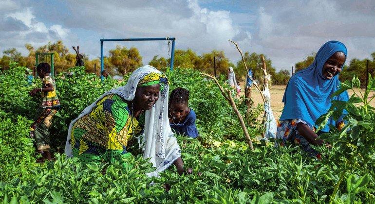 Un huerto gestionado por una cooperativa de mujeres en el sur de Mauritania utiliza la energía solar para regar los cultivos.