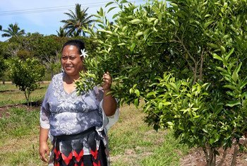Ana T. Tukia, Houma Community Facilitator, in the Houma Community citrus fruit tree project orchard where mandarin and lemon trees are tended to and grown by members of the local community.