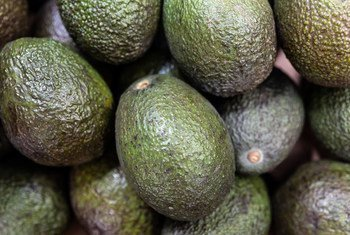 Some 300,000 farmers cultivate avocadoes in the Sidama and SNNPR regions of Ethiopia.
