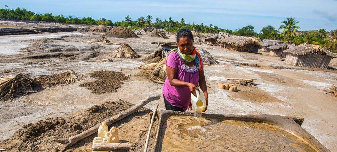 A pistillate   harvests brackish  successful  a mangrove successful  Timor-Leste.