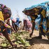 Women work in a vegetable garden in a village in Senegal. The village is part of the