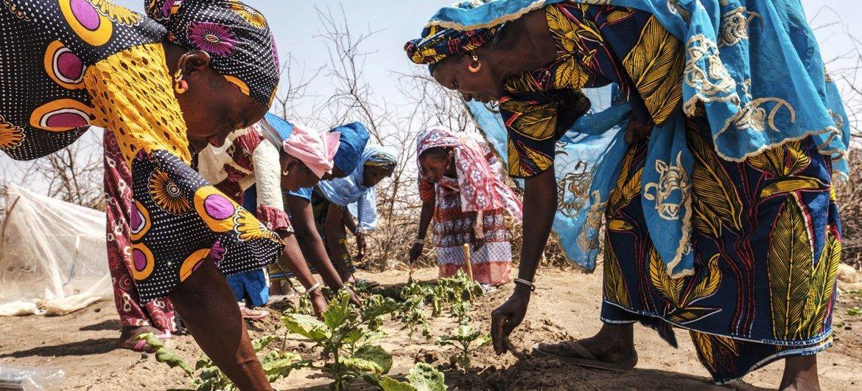 نساء يعملن في حقل في قرية في السنغال.