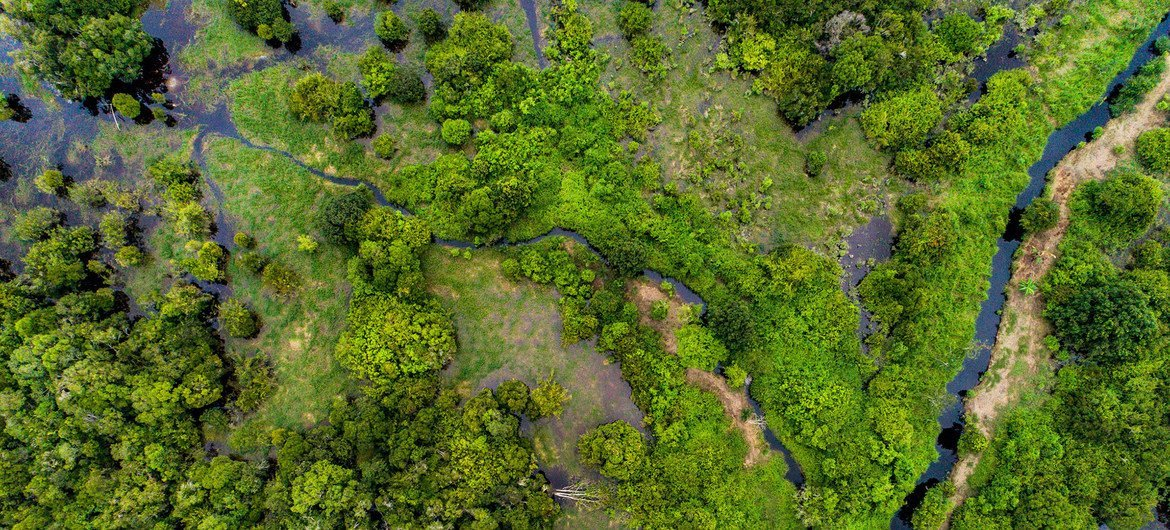 Peatland forests like this one in central Kalimantan, Indonesia, can store harmful carbon dioxide gasses.
